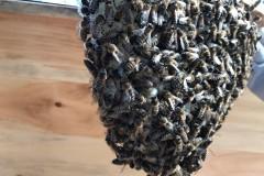 mes abeilles