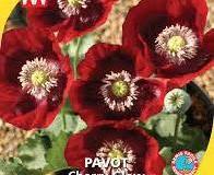 1_pavot-cherry-glow